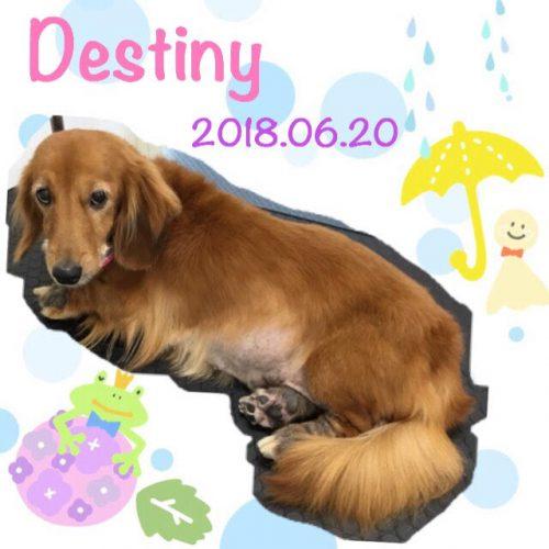 2018.6.20Destiny