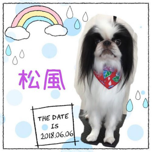 2018.6.6松風