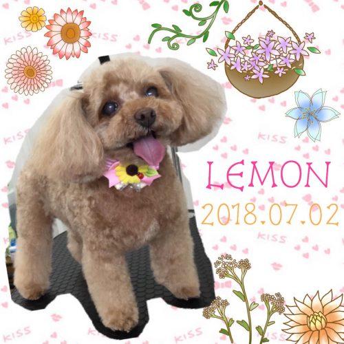 2018.7.2レモン