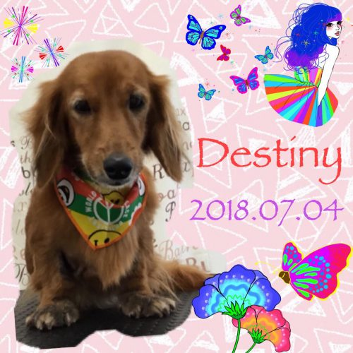 2018.7.4Destiny