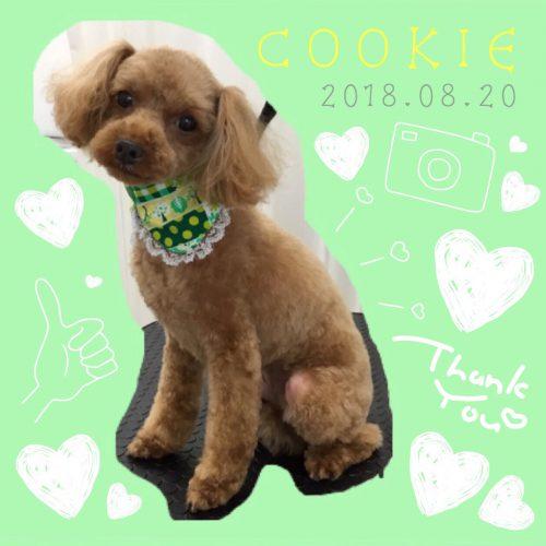 2018.8.20クッキー
