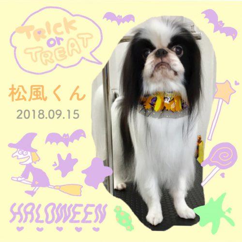 2018.9.15松風