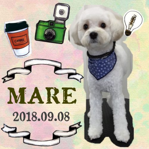 2018.9.8マーレ