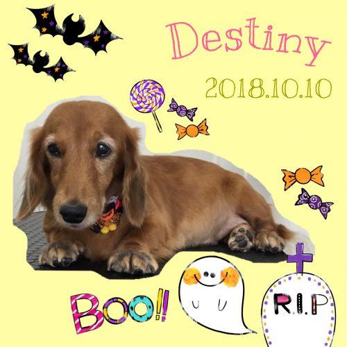 2018.10.10Destiny
