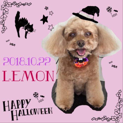 2018.10.22レモン