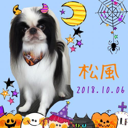 2018.10.6松風