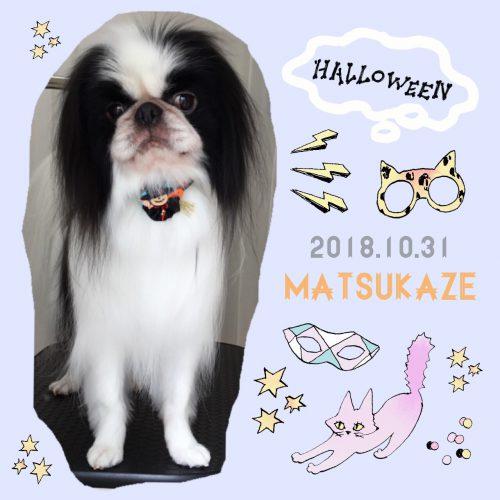 2018.10.31松風