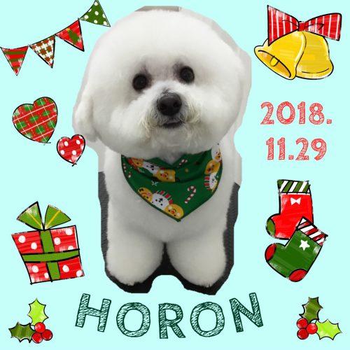 2018.11.29ホロン