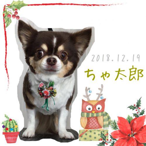 2018.12.19ちゃ太郎