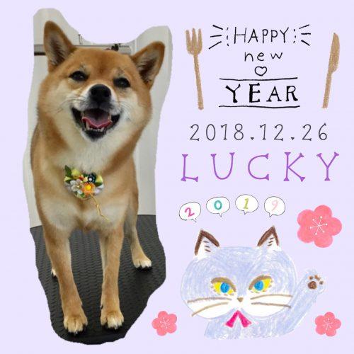 2018.12.26ラッキー