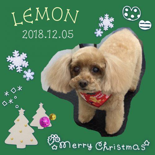 2018.12.5レモン