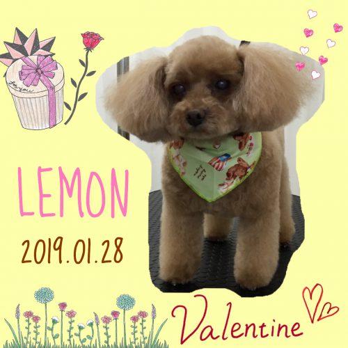 2019.1.28レモン