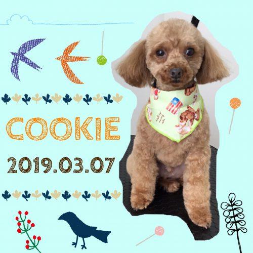 2019.3.7クッキー