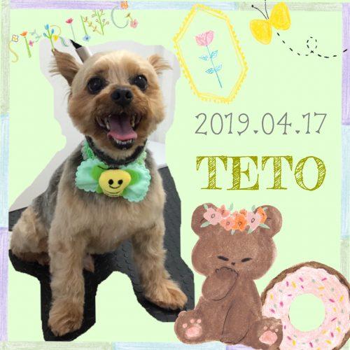 2019.04.17田中テト