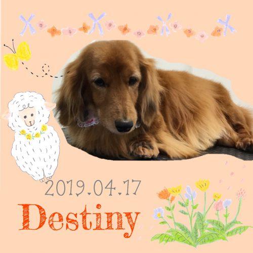 2019.04.17粉川Destiny