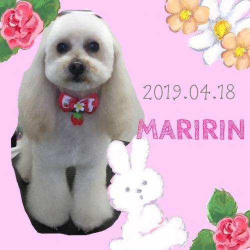 2019.04.18本目マリリン