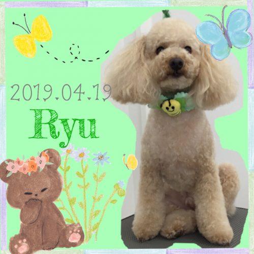 2019.04.19下位Ryu