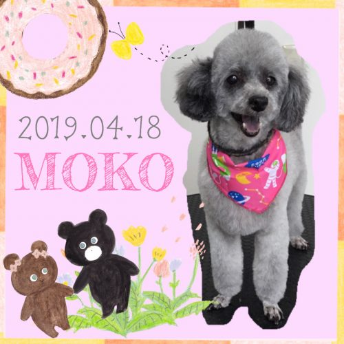2019.04.19中山モコ