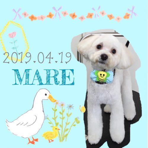 2019.04.19山本マーレ