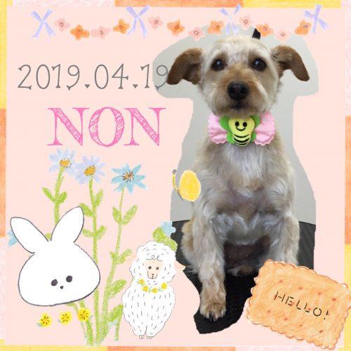 2019.04.20堀尾のん