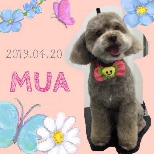 2019.04.20芦田夢亜