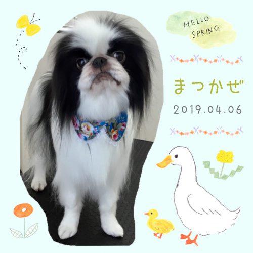 2019.4.6松風