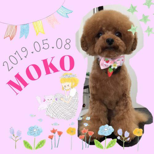 2019.05.08大井モコ