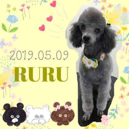 2019.05.09中山ルル