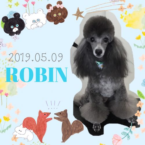 2019.05.09中山ロビン