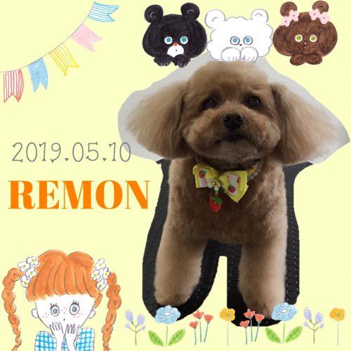 2019.05.10山崎レモン