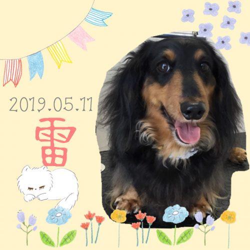 2019.05.11中村雷