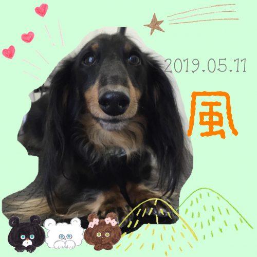 2019.05.11中村風