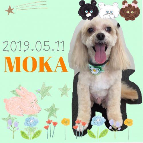 2019.05.11大村モカ