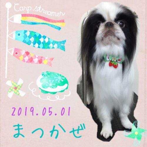 2019.5.1松風