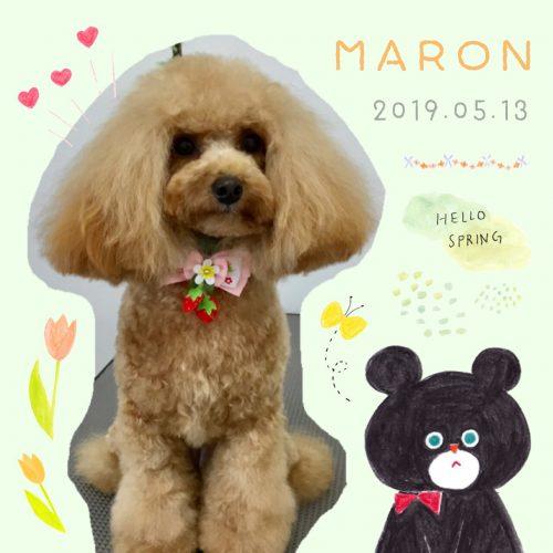 2019.5.13マロン