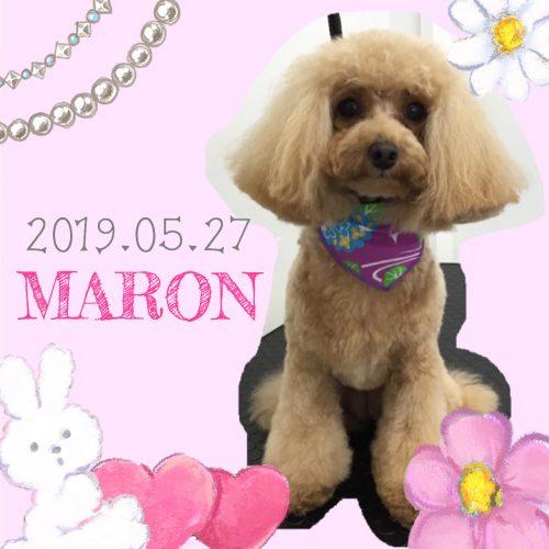 2019.05.27松井マロン