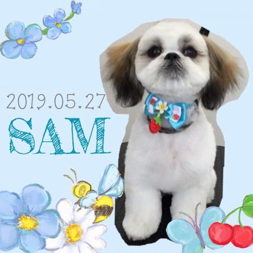 2019.05.27Mcardle SAM