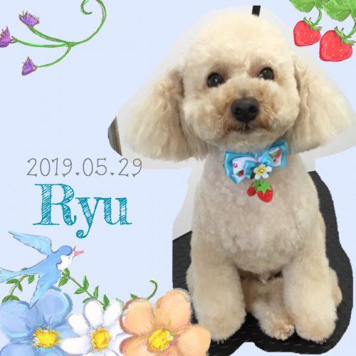 2019.05.29下位Ryu
