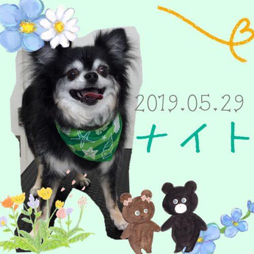 2019.05.29大川ナイト