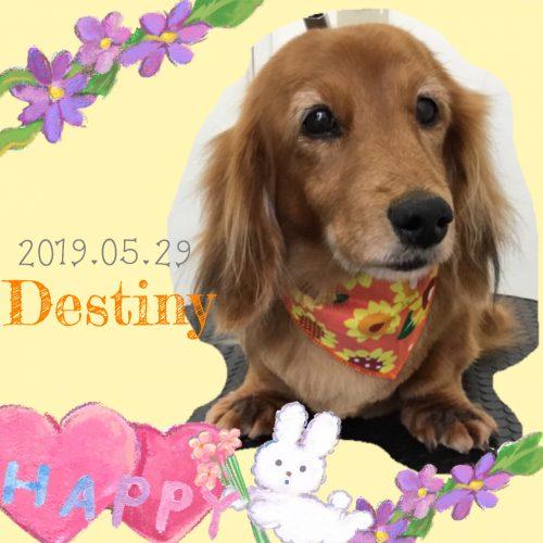 2019.05.29粉川Distiny