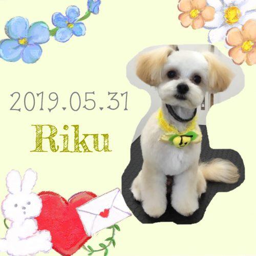 2019.05.31谷澤りく
