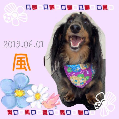 2019.06.01中村風