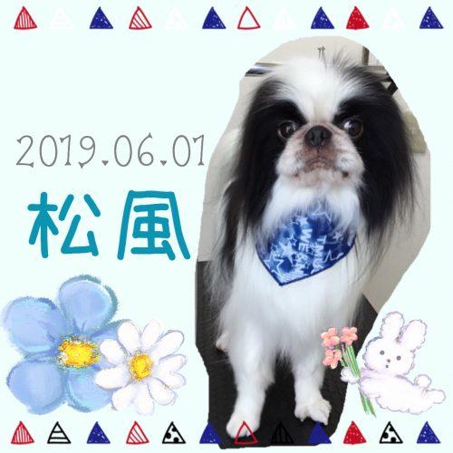 2019.06.01鈴木松風