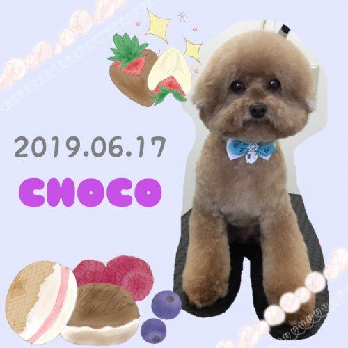 2019.06.17伊藤チョコ