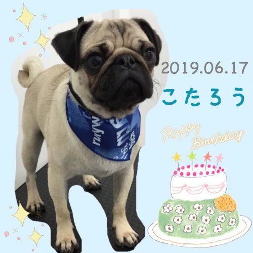 2019.06.17古田コタロウ