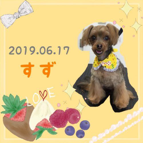 2019.06.17鈴木すず