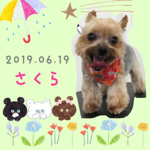 2019.06.19金子さくら