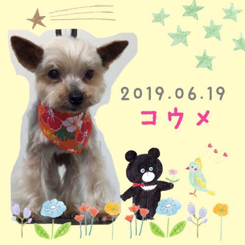 2019.06.19金子コウメ