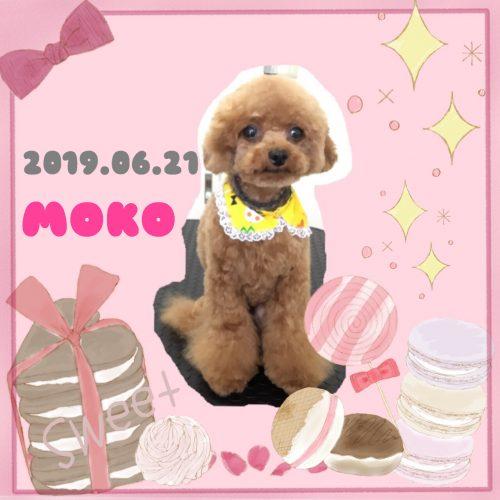 2019.06.21大井モコ