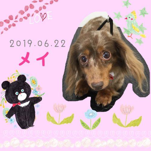 2019.06.22冨岡メイ